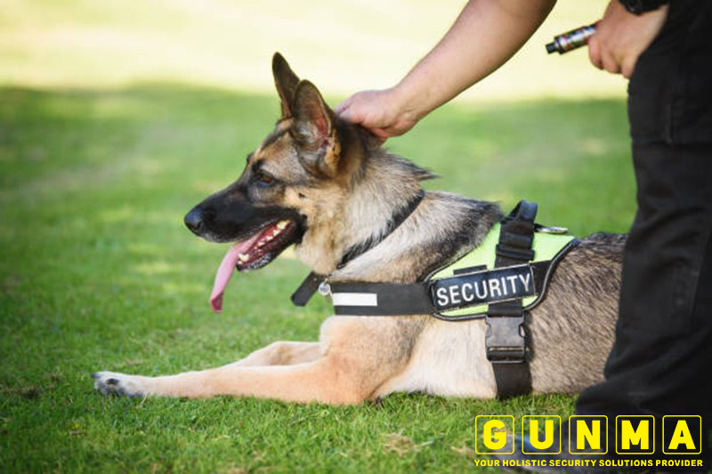 Guard-Dog-1